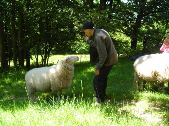 Câlins aux moutons